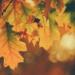 Bullet Journal à thème : l'automne est là