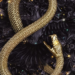 Serpent and dove, un ennemies to lovers comme on les aime